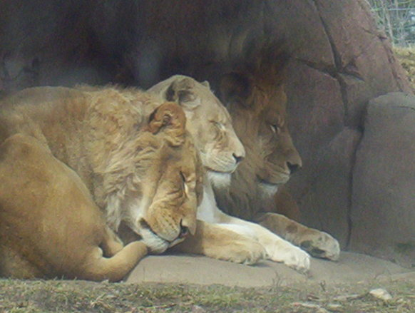 Toronto Zoo6