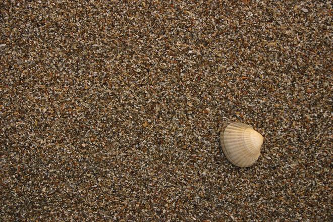 Seashelled 2