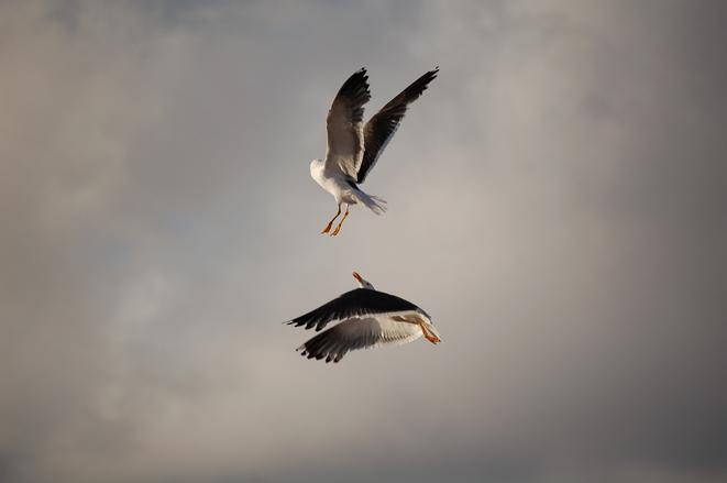Sea Gull_2_11.08.2005