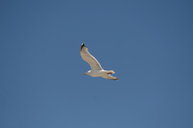 Bird on the myre