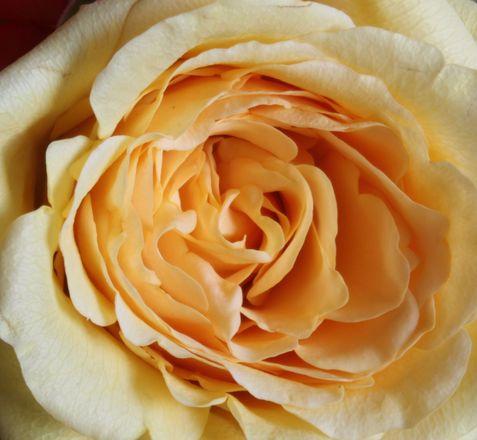 Roses... 2