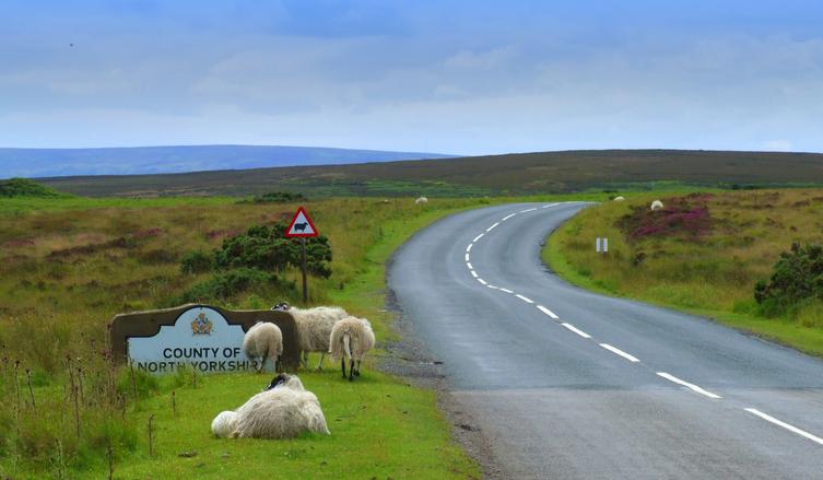 North Yorkshire Moors 2