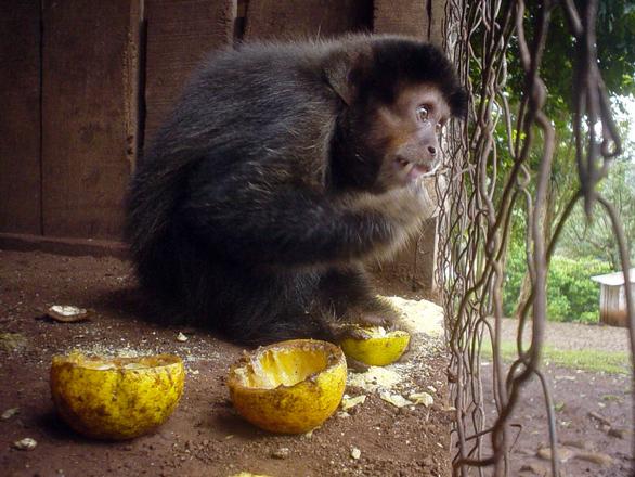 mico carletto 4