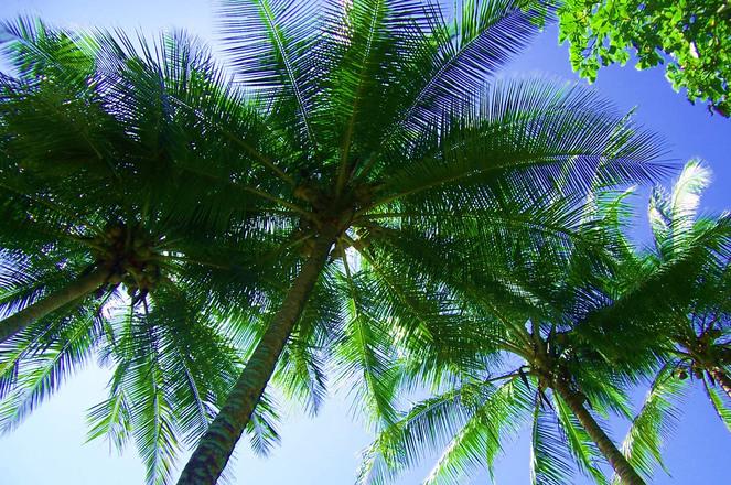 Palm & Sky