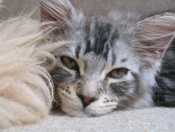 A Cat called Kalamazoo