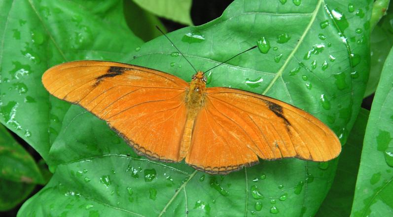 Butterfly In My Eye 3