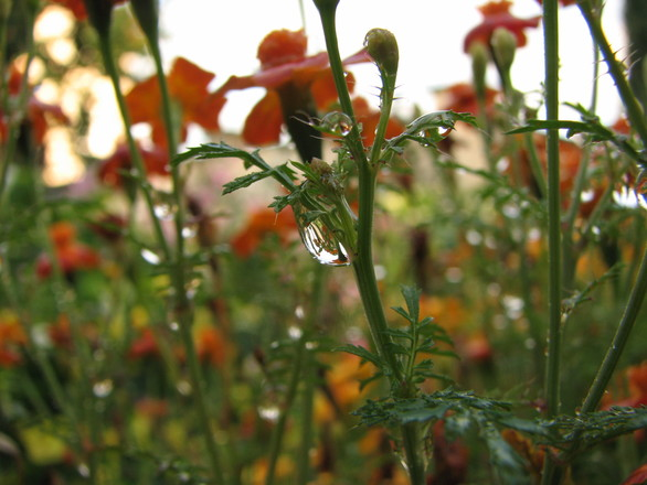 A drop on a flower