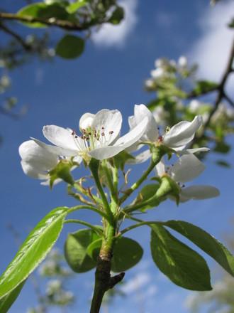Bloomin' Trees 4