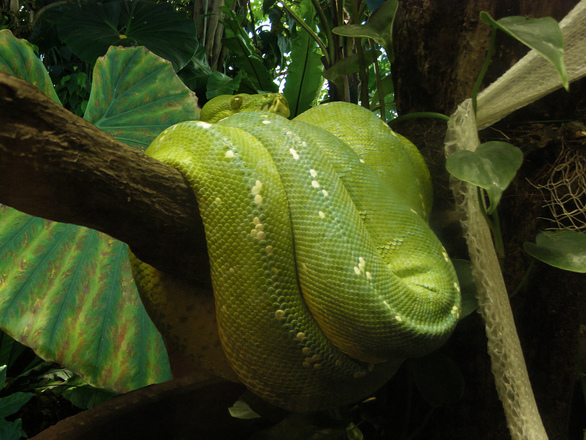 The snake in the tropical forest