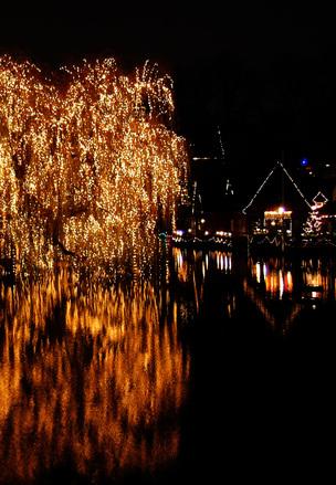 Shiny tree 1