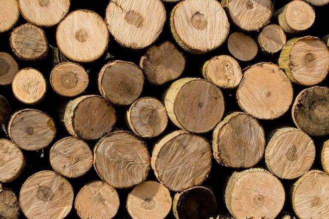 Wood Pile Photo File 1632722