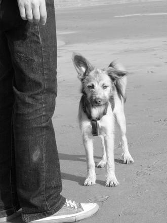 Dog in B&W