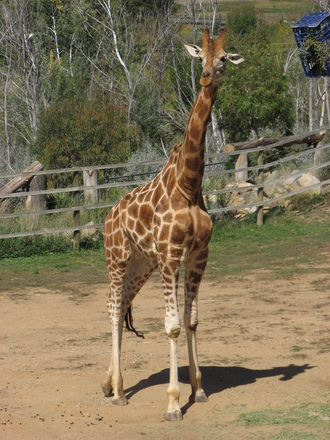 At the zoo 1