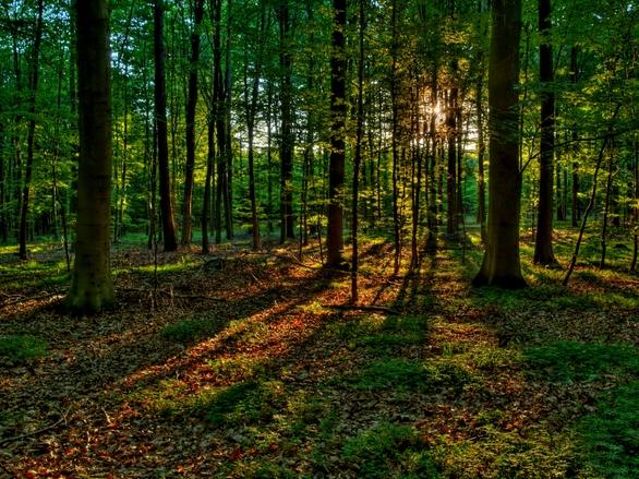 夏天的树林简笔画