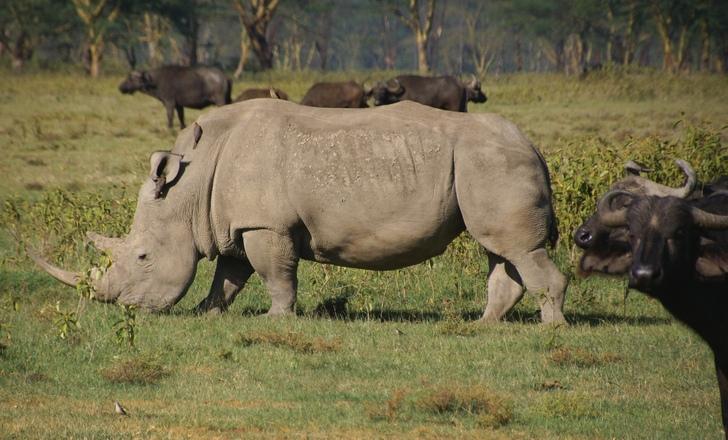 rhino portrait 2