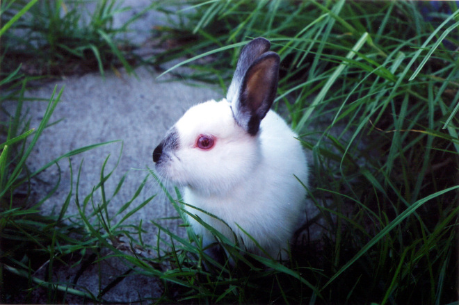 Miff the white rabbit 2