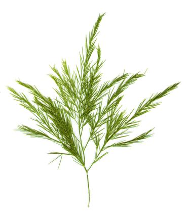Weird weedy thing 3