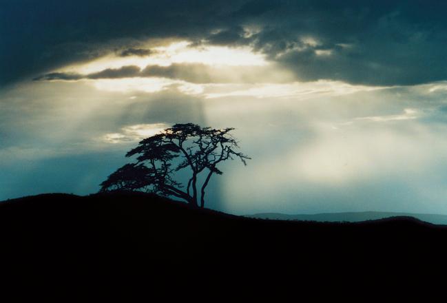 Serengeti Sunset 3