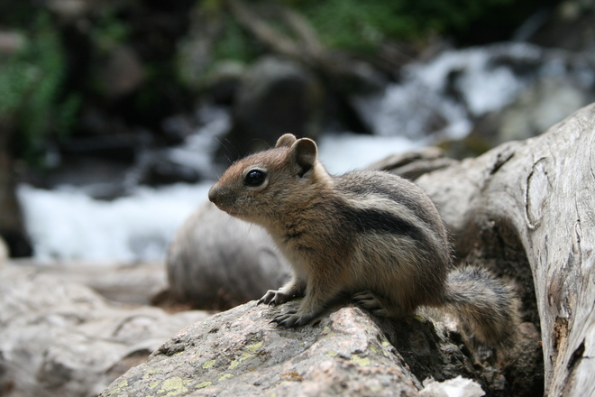 Ground squirrel movie