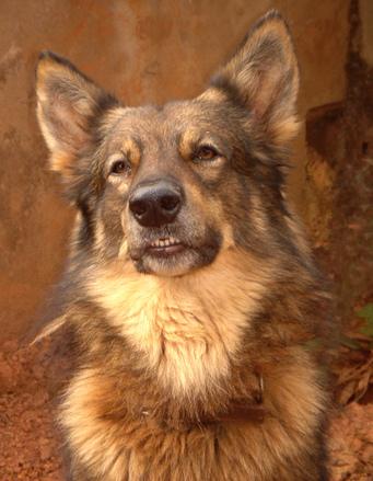 Sox my dog 2