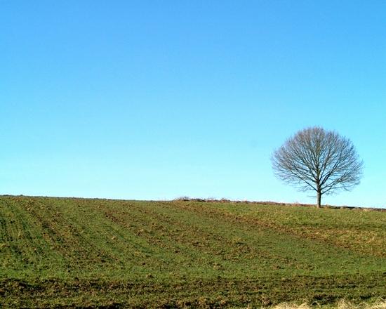 Tree on a blue sky