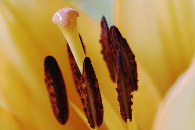 Macro , flower