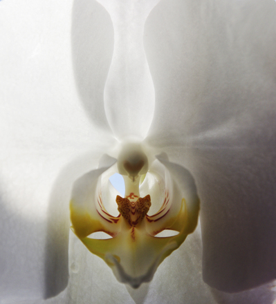 orchid angels 2