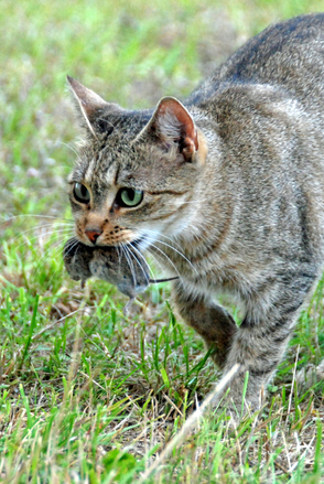 Free Cat And Mouse Stock Photo Freeimages Com
