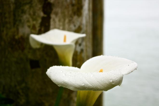 Flower by Sea