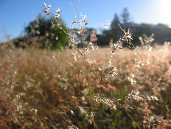 Grass Shoot
