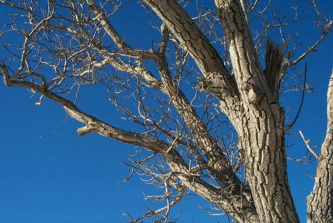сезон голых деревьев-пы1
