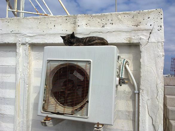 Cat resting on air conditioner