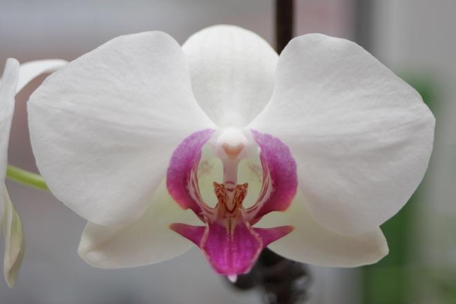 Орхидея цветок одиночества