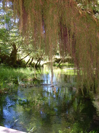 Mossy Lagoon