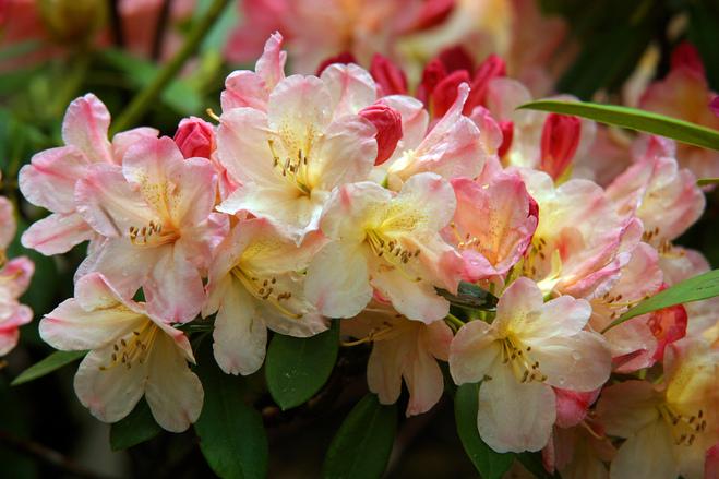 Цветок ёка