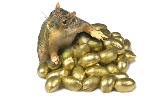 free squirrel with golden nuts stock photo freeimagescom