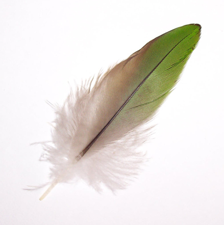 Green Feather 1