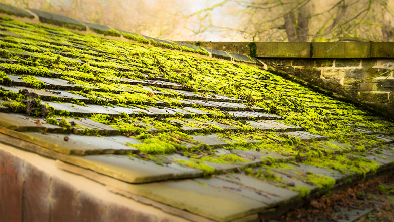 Green Moss on Stone Roof