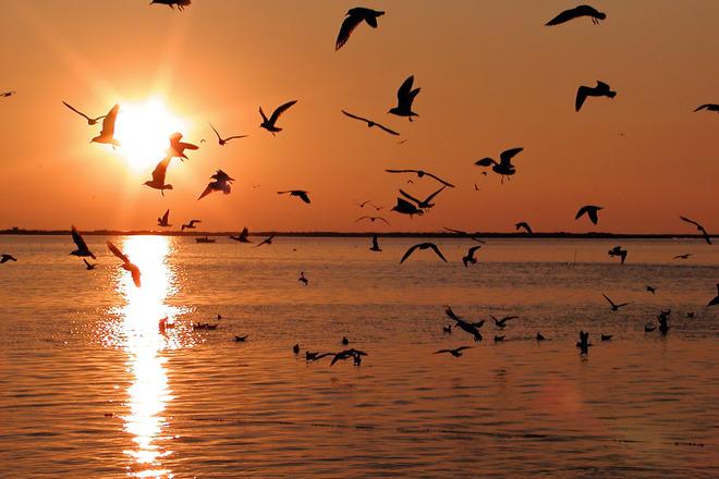 Black Seagulls