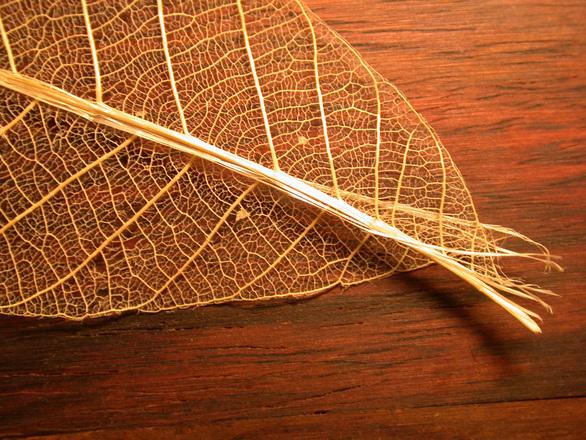 Chinese leaf 3