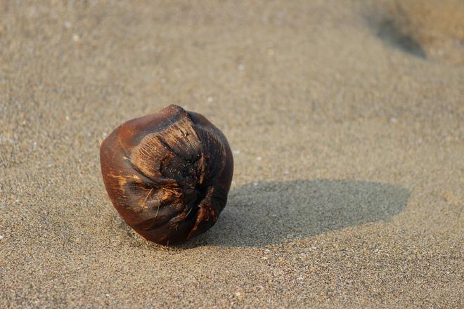 Coco palm on beach