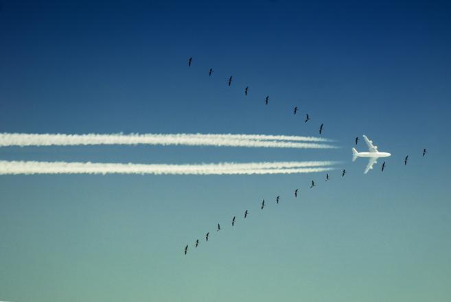Phalanx of Wings