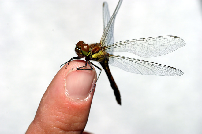 Trusting Dragonfly