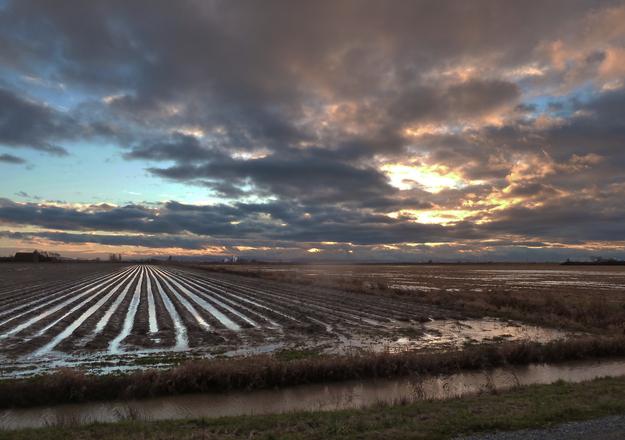Farm Furrows Sunset
