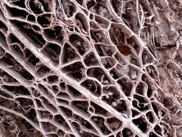 old dry cactus
