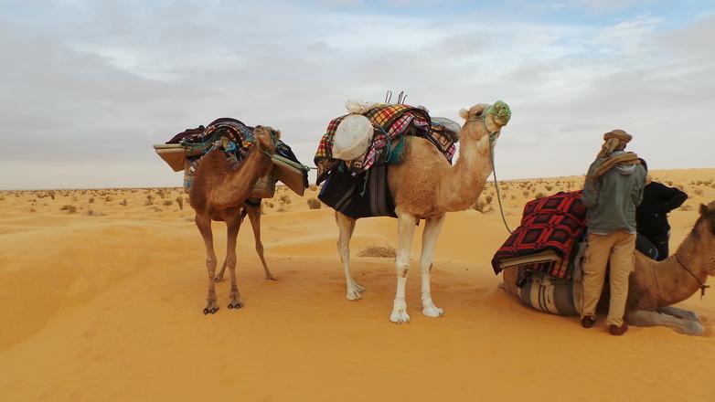 sahara beduins 1