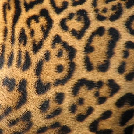 Animal textures