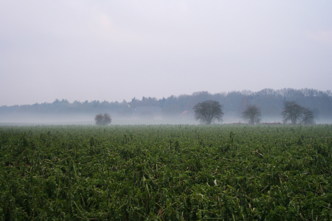 Field in Elten