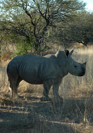Nkosi Sikelel'i Africa #3