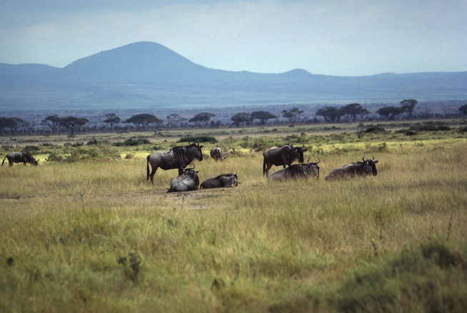 Afrikka